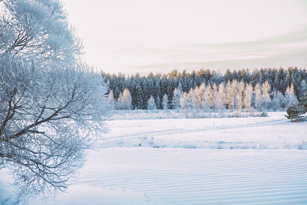 Marjatilan talvi